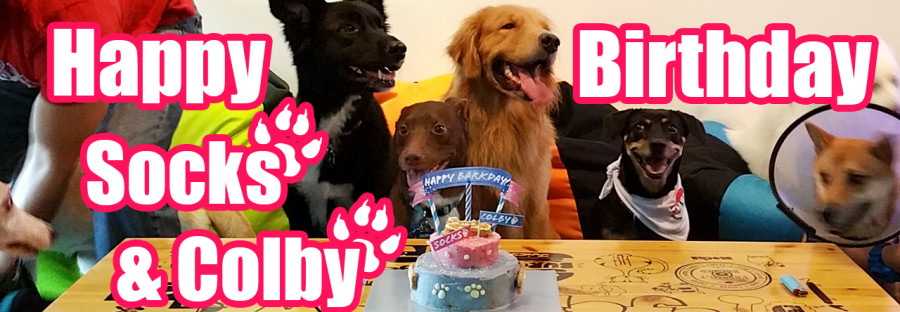birthday party at Ah B Cafe for dogs