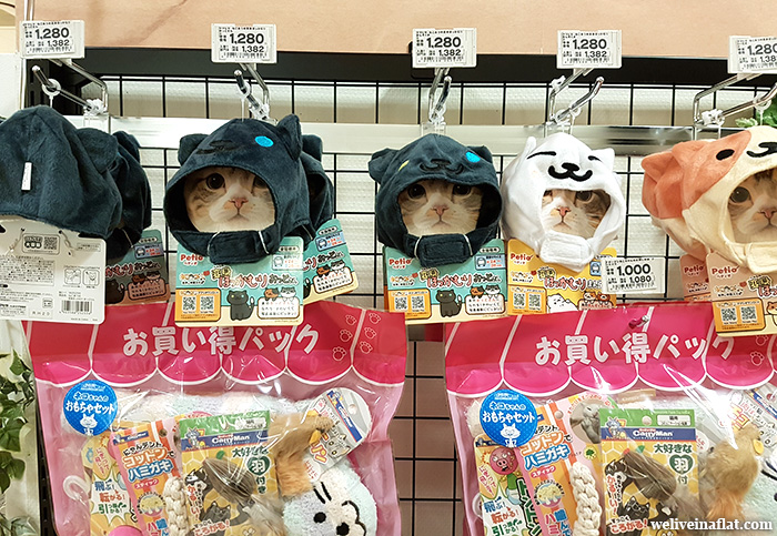 kyoto aeon mall aeon pet store japan cat hood