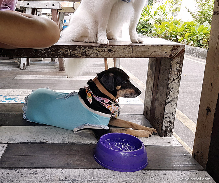 Artistry Cafe dog-friendly outdoor table, Singapore