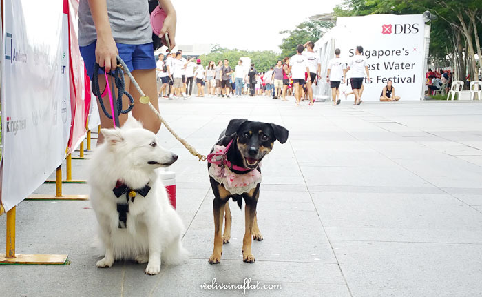 DBS Marina Regatta 2015 dog friendly