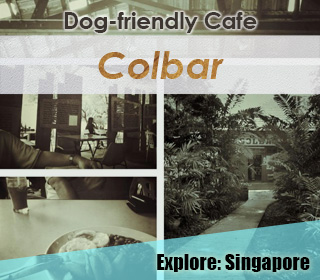 dog friendly colbar singapore