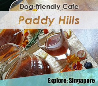 dog friendly paddy hills singapore