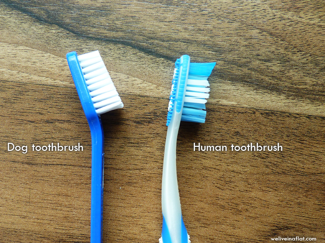 dog versus human toothbrush