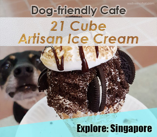 dog friendly singapore cafe sg 21 cube artisan ice cream at ang mo kio central