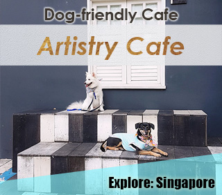 artistry cafe singapore dog friendly