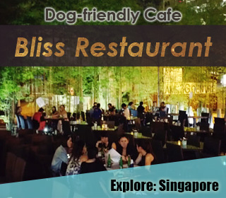 dog friendly singapore cafe bliss restaurant in ang mo kio
