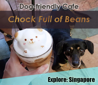 chock full of beans, changi dog friendly