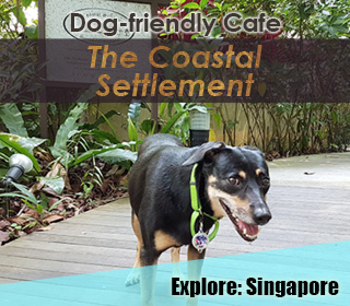 the coastal settlement, changi dog friendly