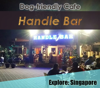 dog friendly handle bar singapore