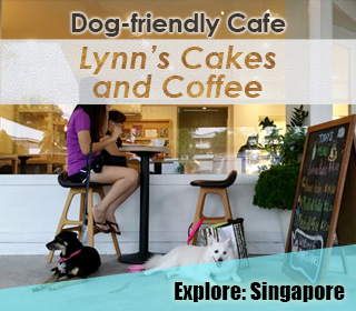 dog friendly singapore cafe lynn's cakes and coffee