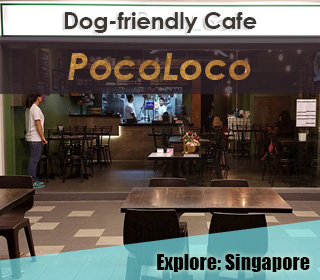 dog friendly singapore cafe pocoloco in ang mo kio