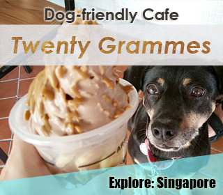 dog friendly singapore cafe twenty grammes at Ang mo kio