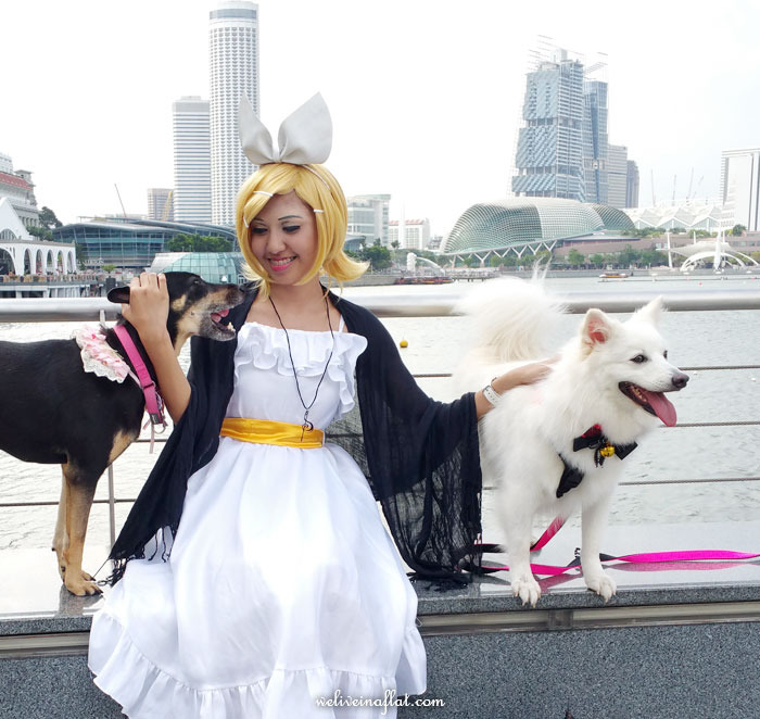 DBS Marina Regatta 2015 dog friendly cosplayer