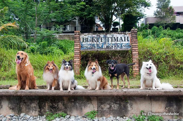 dogs of instagram suffer through group photo together