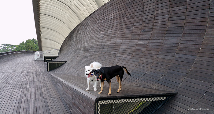 dog friendly food and cafes around HortPark, Southerm Ridges, Kent Ridge Park - Donna and Cookie at the Henderson Waves Bridge