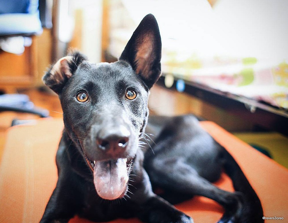 leyla black stray mongrel singapore special