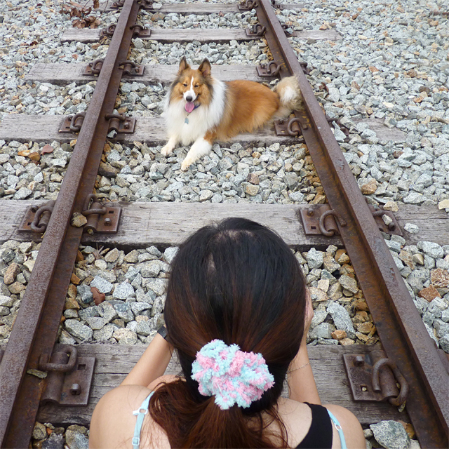 taking a photo of a dog on a railway track
