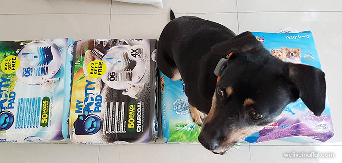 My Potty Pad regular and charcoal versions - singapore pet peed pad review