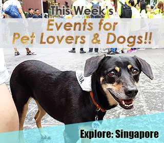 singapore dog events