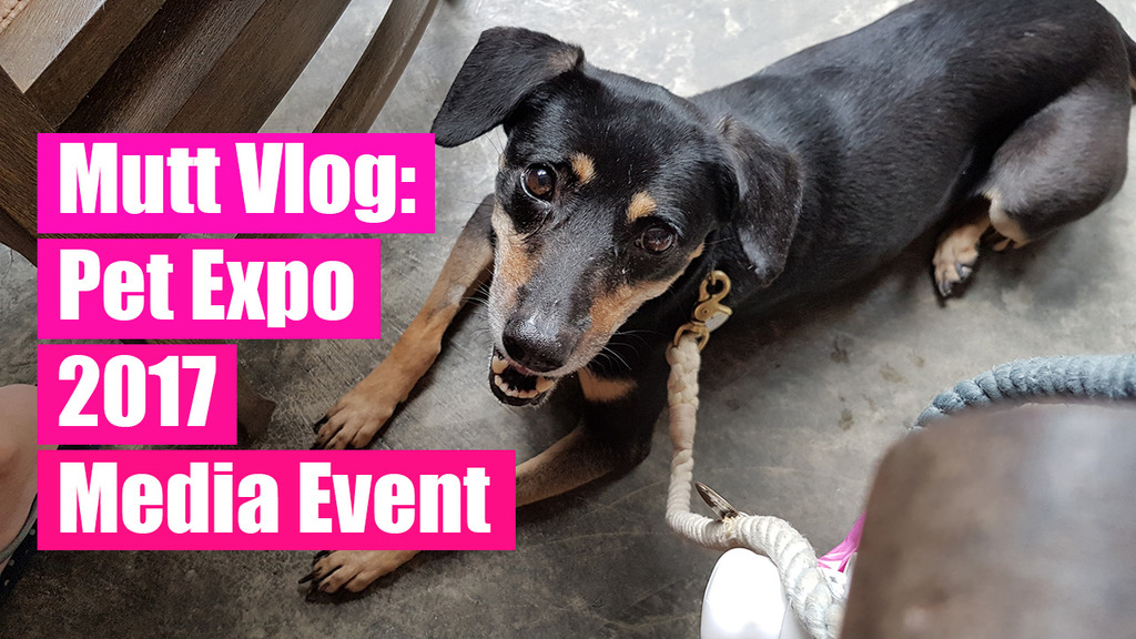 Pet Expo Singapore 2017, dog-friendly events
