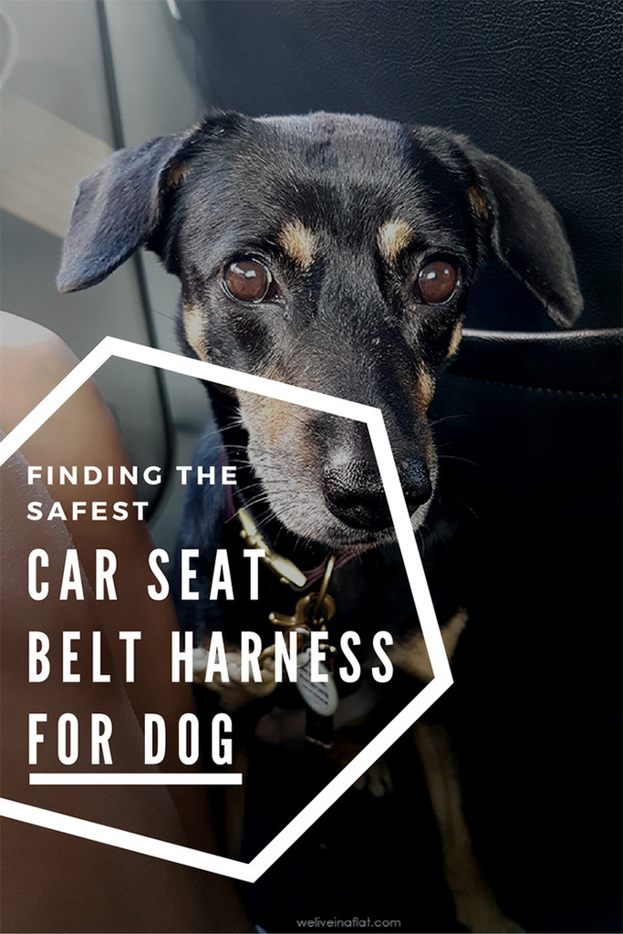Fasten that seat belt! Finding the best safest car harness for dog