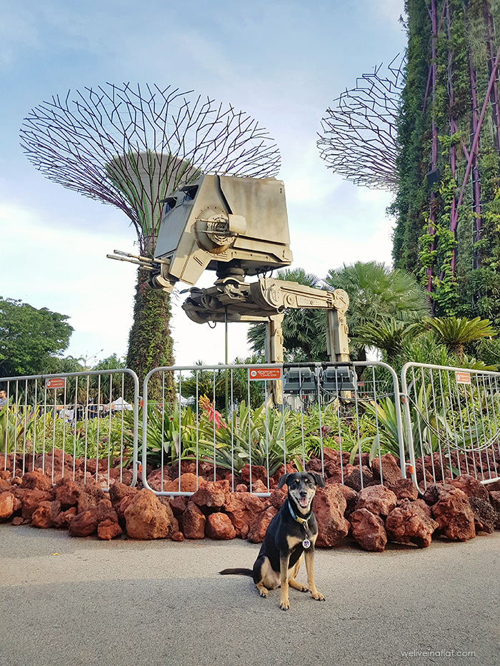 mongrel dog at star wars day, star wars festival, singapore, gardens by the bay, supertree grove