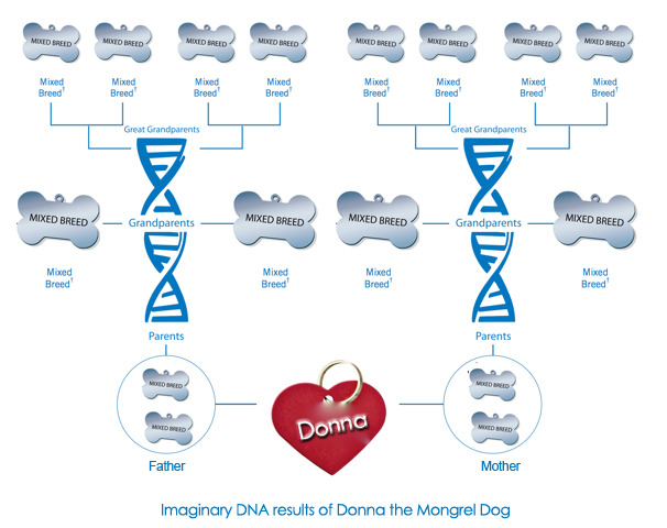 imaginary Wisdom Panel DNA results of Donna mongrel dog