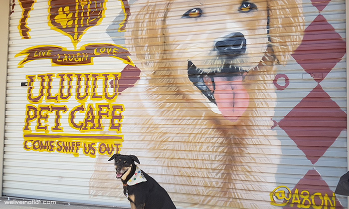 ulu ulu pet cafe - wall mural golden retriever