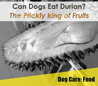can dogs eat durian