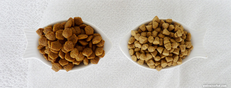 Choose dog dry food with logic: comparing dog dry food brands