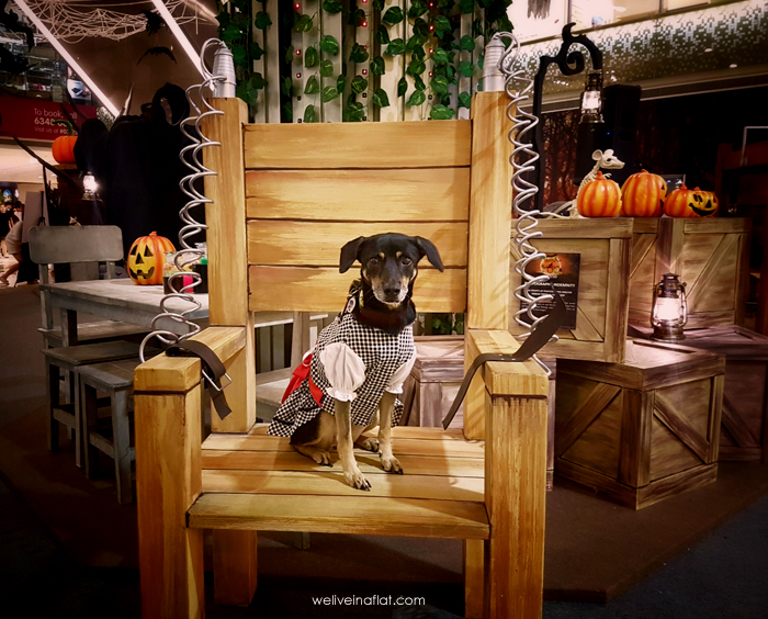 halloween paw fest 2017 i12 Katong Mall dog on electric chair