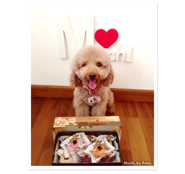 mochi dog with pawsitive treats mooncakes