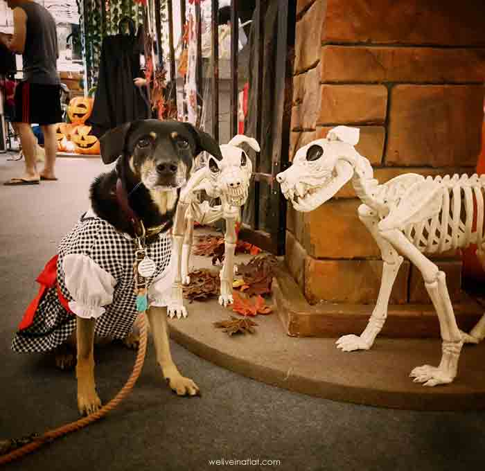 halloween paw fest 2017 i12 Katong Mall dog bones skeleton