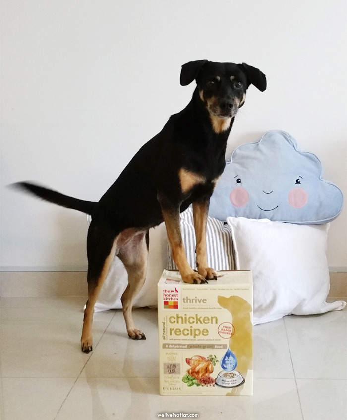 the honest kitchen thrive food for dogs