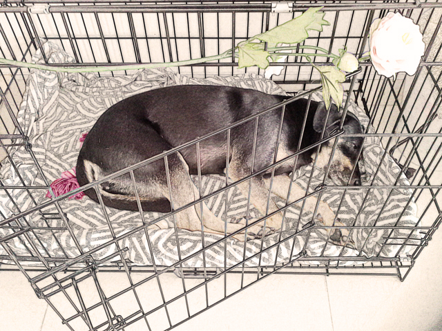 Donna sleeping on her side in the crate