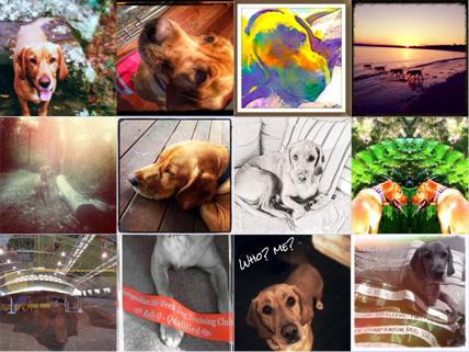 1st world dog snappy happy photo challenge photo grid