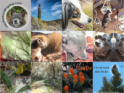 Roxy the Traveling Dog snappy happy photo challenge photo grid