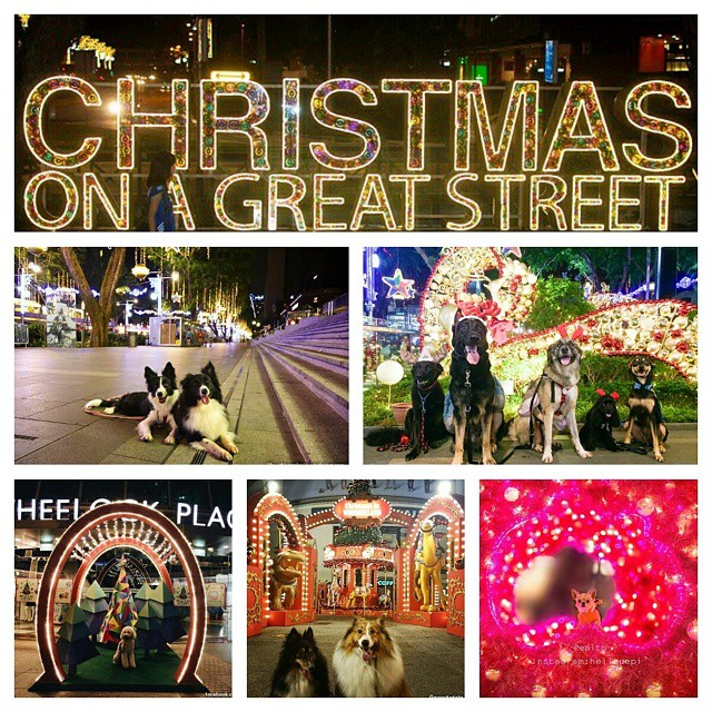 christmas on a great street collage of dog photos