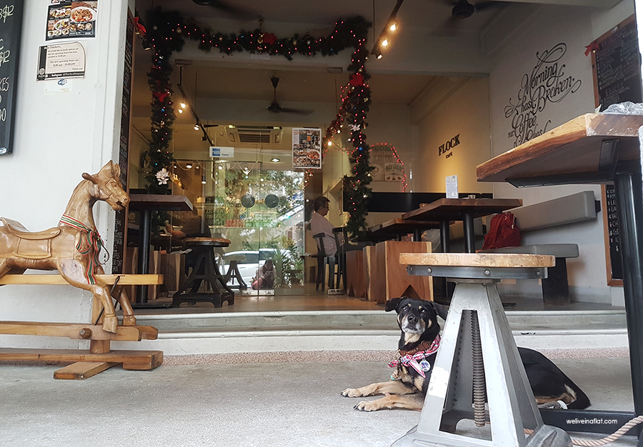 dog-friendly tiong bahru restaurant - Flock cafe