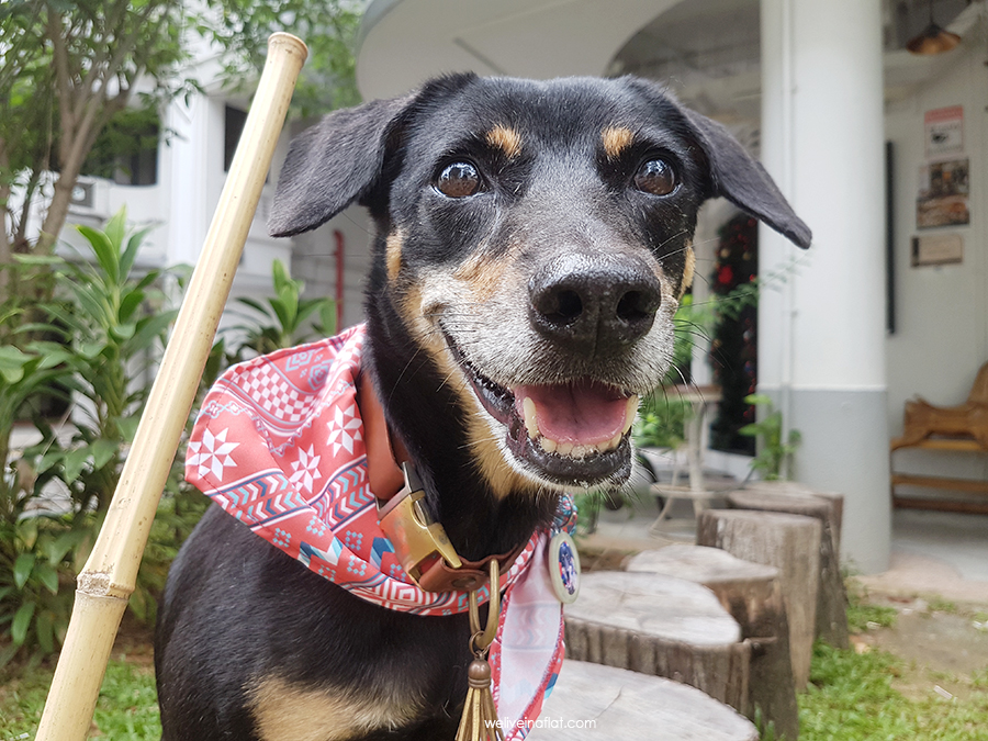 dog-friendly cafes in Tiong Bahru