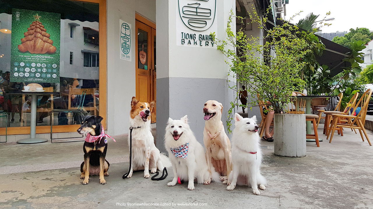 dog-friendly cafe - Tiong Bahru Bakery outdoor seating - mongrels and jap spitz