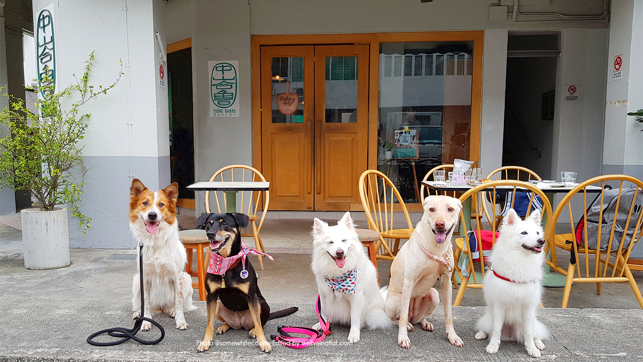 Dog Friendly Cafe Near Me